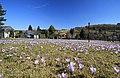 Drebacher Krokuswiesen..2H1A0591WI.jpg