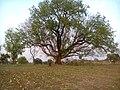 Dugariya, Madhya Pradesh 471101, India - panoramio (8).jpg