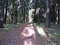 Dusetų sen., Lithuania - panoramio (126).jpg
