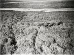 ETH-BIB-Fliehende Elefantenherde im Sudan-Kilimanjaroflug 1929-30-LBS MH02-07-0072.tif