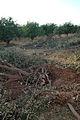 Eau-irrigation (1).jpg