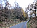 Edge of Gwern-y-Ceffla wood - geograph.org.uk - 1588620.jpg
