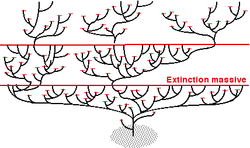 Effets extinctions.png