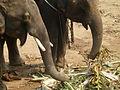 Elephant riding in Kanchanaburi P1100913.JPG