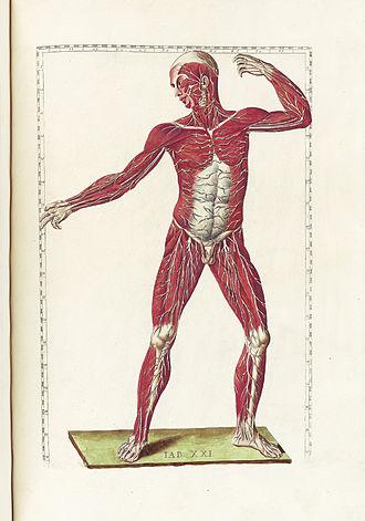 Bartolomeo Eustachi - Tabulae anatomicae (Rome, 1783) Table 21