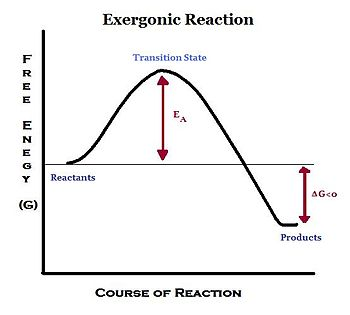 exergonic reaction