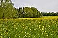 FFH-BW-RV-Gebiet Altdorfer Wald-NL8.jpg