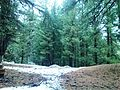 Fairy Meadows -Nanga Parbat Base Camp51.jpg