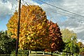 Fall Foliage in Johnstown Region - panoramio (5).jpg