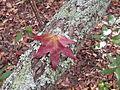 Fall at FLSP (5248764543).jpg