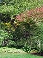 Fall colors (6176103504).jpg