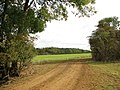 Farm track past cultivated fields - geograph.org.uk - 1951101.jpg