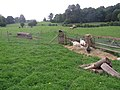 Farming at Puzzlewood - July 2011 - panoramio.jpg