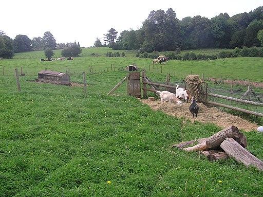 Farming at Puzzlewood - July 2011 - panoramio
