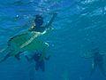 Fauna marina de Barbados 2007 004.jpg