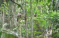 Fauna silvestre com representação de um sagui no Parque nacional de Ubajara.jpg