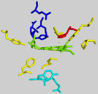 Ferrochelatase - Ferrochelatase active site with protoporphyrin IX substrate in green. Residues shown are: hydrophobic groups holding protoporphyrin IX (yellow), anionic proton transfer path (dark blue), metalation residues (cyan), catalytic histidine (red).