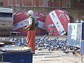 Feeding birds (4189263540).jpg
