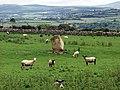 Ffynnon Druidion - geograph.org.uk - 3474.jpg