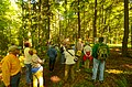 Field Trip in the Forest - Flickr - wackybadger (3).jpg