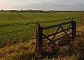 Field near Flinton - geograph.org.uk - 1582618.jpg