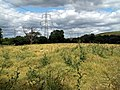Field of oilseed rape looking to Barnby Furnace - geograph.org.uk - 481776.jpg