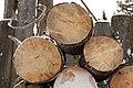 Firewood in Russia. img 24.jpg
