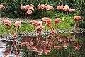 Flamingo im Weltvogelpark Walsrode 2H1A7163WI.jpg