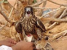 Flesh eating bird.jpg