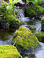 Flickr - Nicholas T - Tiny Cascade.jpg