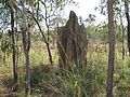 Flickr - brewbooks - Cathedral Termite Mound - Litchfield National Park.jpg