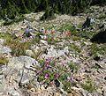 Flickr - brewbooks - Natural Rock Garden.jpg
