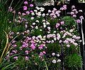 Flickr - brewbooks - Propagation - Sandy and Ted's Garden.jpg