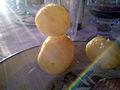 Flickr - cyclonebill - Kartofler.jpg