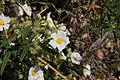 Flora della Sardegna 259 (04).jpg