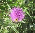 Flower&Bee.JPG