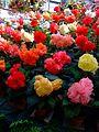 Flower-center141425.jpg