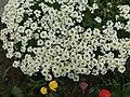Flower.2148.JPG