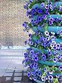 Flower1 - panoramio.jpg