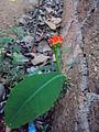 Flower (291).JPG