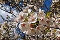 Flowers (26074947974).jpg