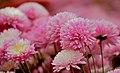 Flowers in Pink.jpg
