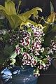 Flowers in vase (5970832799).jpg