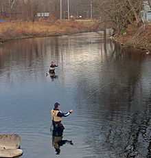 Two men in waders casting long fishing poles with yellow-colored line in flat water on a bend of a river, seen from slightly above the water.
