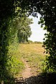 Footpath emerges from narrow strip of woodland - geograph.org.uk - 900627.jpg