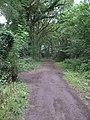 Footpath through Warburton's Wood - geograph.org.uk - 1388286.jpg