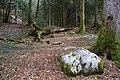 Forêt @ Alex (51097552821).jpg