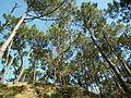 Forêt de Suzac (2).JPG