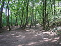 Forêt de brocéliande.JPG