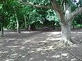 Forêt sacrée du village de Gbogolo.jpg